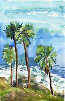 palm trees on the cliff