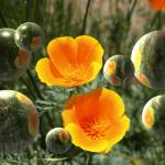 """""""Poppies And Bubbles"""" by FlaminCatDesigns"""