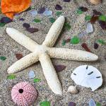 """Starfish beach still life"" by photogarry"