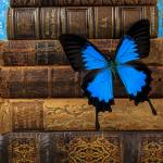 """Butterfly and old books"" by photogarry"