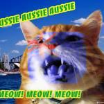 """Aussie Aussie Aussie! Meow! Meow! Meow!"" by kristie-elizabeth"