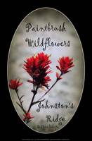 paintbrush wildflowers, Johnston's Ridge 2 oval