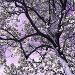 """""""Silver Magnolias"""" by ShawnaRowe"""