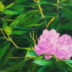 """""""Rhododendron Blossom"""" by ecoop"""