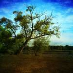 """Blue Sky"" by Farram"