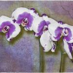 """Purple Phalaenopsis"" by GiorgettaMcRee"