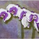 """Purple Phalaenopsis"" by GiorgettaMcRee"