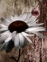 Daisy and Rust