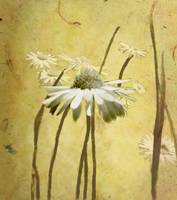 Portrait of Daisies