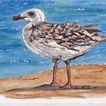 """""""Seagull"""" by SheenaBolken"""