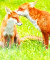 Red Foxes, Two