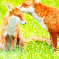 Red Foxes, Two Art Prints & Posters by Marian Cates