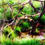 """swamptree"" by ralphnelsen"