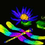 """DRAGONFLY AND FROG"" by RaKa"