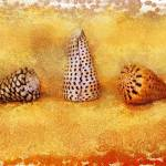 """SEASHELL CONES"" by RaKa"