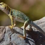 """""""lizard"""" by dmbsps"""