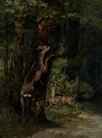Deer in the Forest, 1868 (oil on canvas)