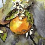 """Orange Blossom Botanical Watercolor and Ink by Gin"" by GinetteCallaway"