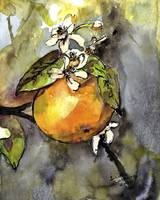 Orange Blossom Botanical Watercolor and Ink by Gin