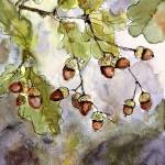 """Acorns and oak Leaves Watercolor and Ink by Ginett"" by GinetteCallaway"