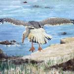 """Gull on the Washington coast"" by sboyle"