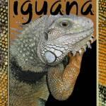 """iguana"" by eye4nature"