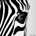 """""""zebra 1"""" by markashkenazi"""