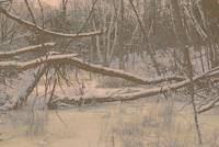 Snow Covered Swamp