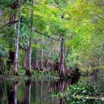 """Wild Florida - Hillsborough River"" by Groecar"