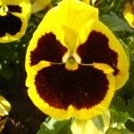 """""""Bohemian Flower"""" by Artsart"""