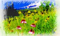 Prairie Coneflower Mountain Scene