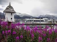 Fireweed Harbor