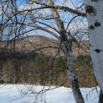 """Birch Trees in Vermont"" by andreifilippov"