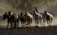 Cowboys and Horses-4462