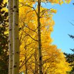"""Flagstaff Fall Colors - 2012-0089"" by FindleyPhoto"