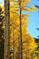 Flagstaff Fall Colors - 2012-0089
