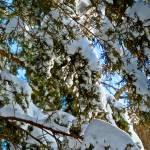 """Sun Snow II"" by GBPhotography"