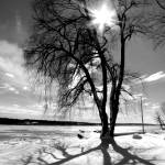 """""""Shadow Tree IV"""" by GBPhotography"""
