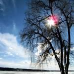 """Shadow Tree III"" by GBPhotography"