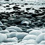 """""""Frozen by the Sea"""" by CCYPhotography"""