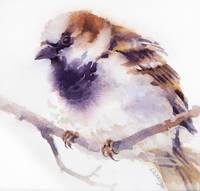 House Sparrow IV