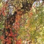 """""""Fall Curtain"""" by bethallen"""