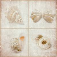 Coquillage Set