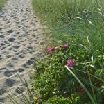 """Sandwich Beach Path"" by MzEmCab"