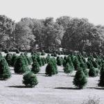"""Christmas Tree Farm"" by joanielesnick"
