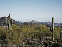 McDowell Sonoran Preserve - Red Mountain #2