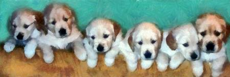 Golden Puppies