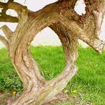 """""""Oh Tree"""" by sondrasula"""
