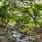 """""""Hawiian Park"""" by VHarris"""