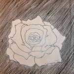 """White rose pencil drawing"" by fotodejan"